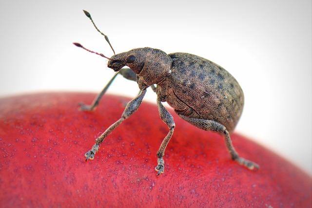 Free               bug animal macro