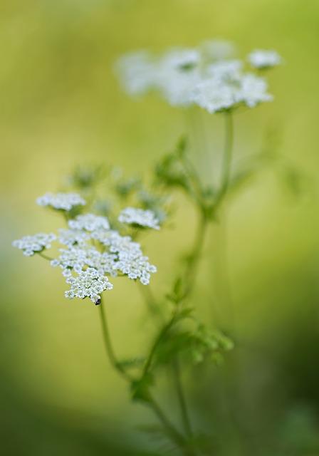 Free doldengewaechs flower light flowers lichtspiel