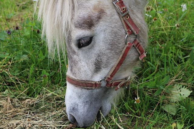 Free horse pony head foot tugs richard eats eating