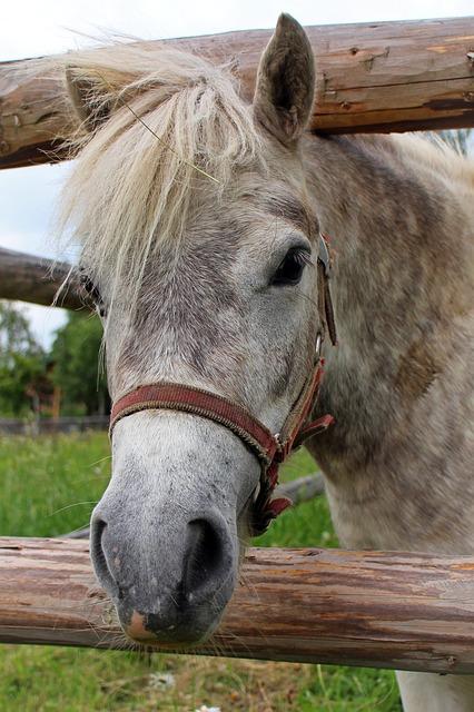 Free horse head head horse pony mane eyes ears