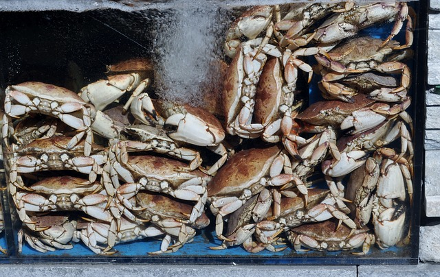 Free lobster crawfish shear animal cancer eat food