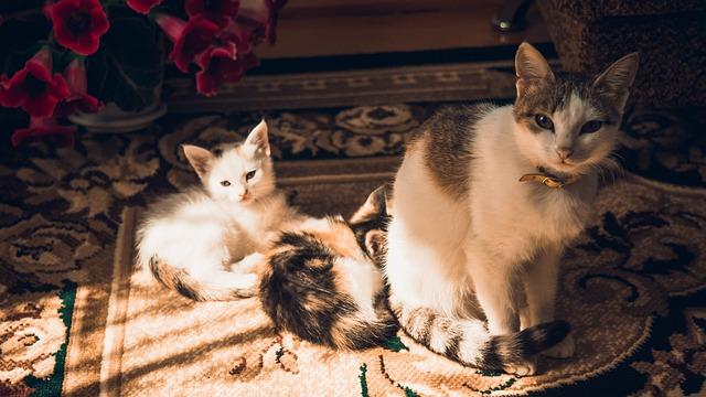 Free cat kittens family kitten fluffy cat cats animals