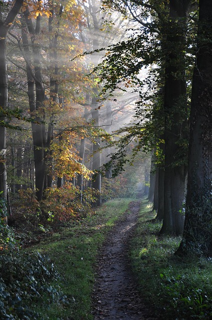 Free path forest trees sunbeams country fog nature