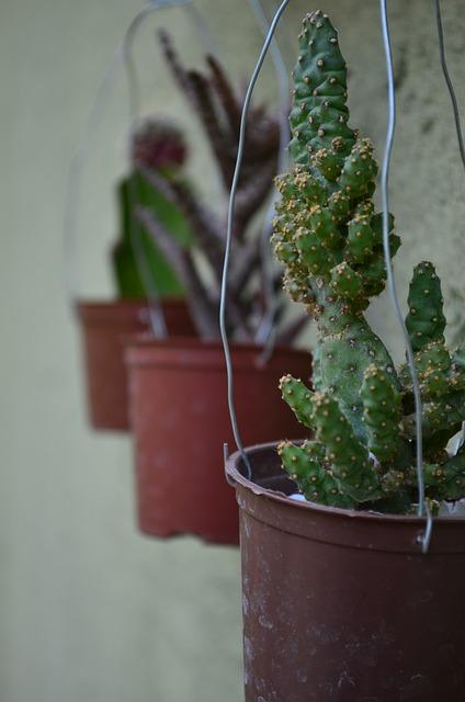 Free cacti green garden plant