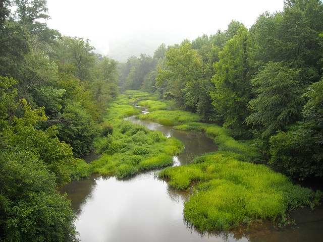 Free green stream water creek woods scenery flowing