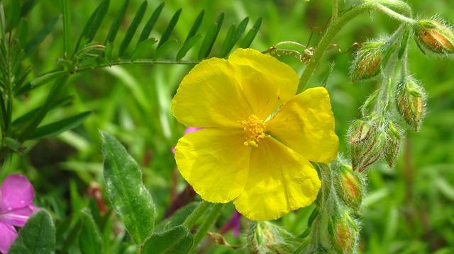 Free brown flower yellow