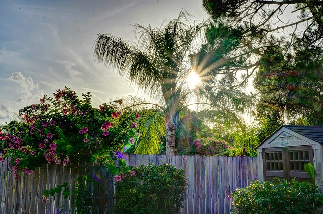 Free sunset fence shed flowers landscape countryside