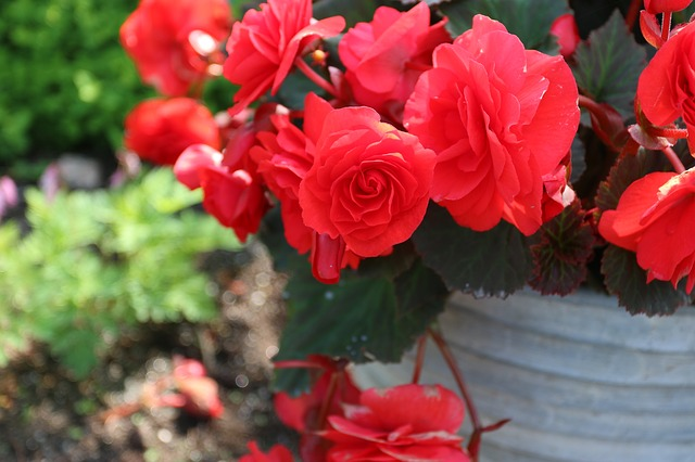 Free red kukkka flower garden plant summer
