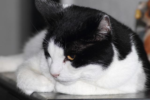 Free hangover cat cozy pets beautiful pet playful
