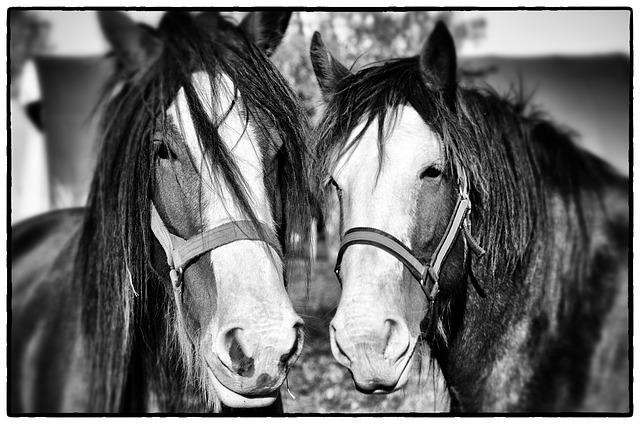 Free horses plow horse equine nature farm