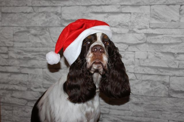 Free spaniel dog christmas santa claus cap