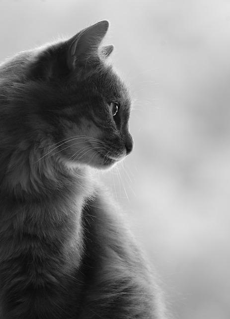 Free cat profile silhouette