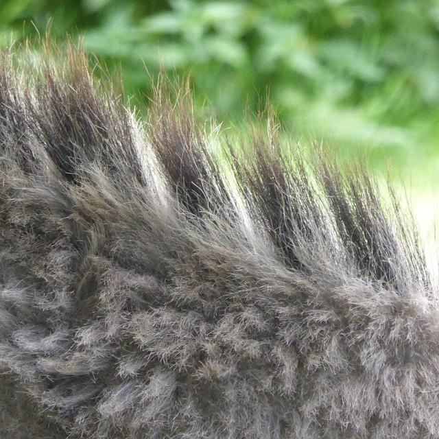Free donkey mane fur grey