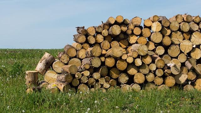 Free firewood tree billet the sawed down wooden