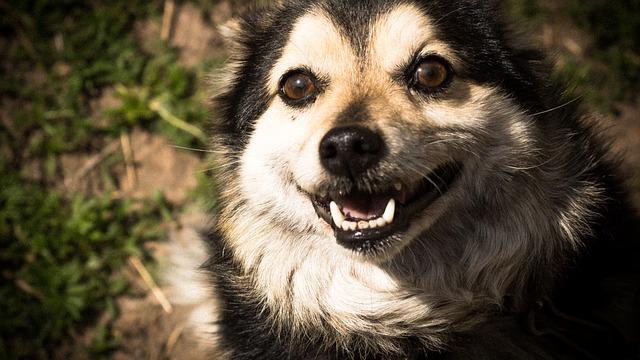 Free dog view eyes animals pets man's best friend