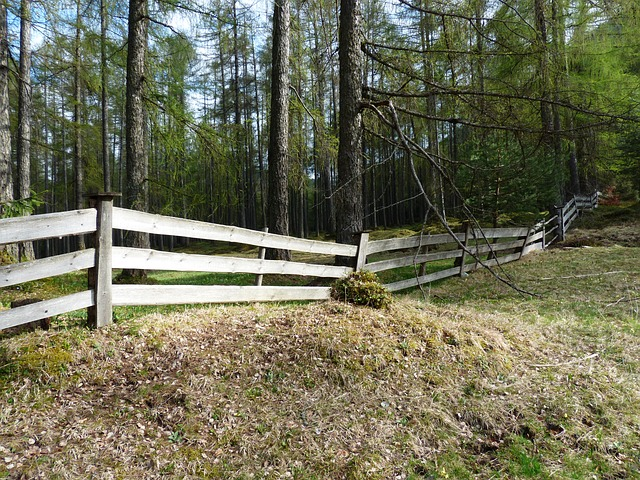 Free fence wood fence paling demarcation boards forest