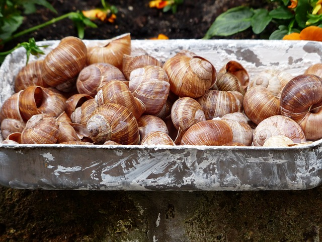 Free escargots snails collection shells helix pomatia
