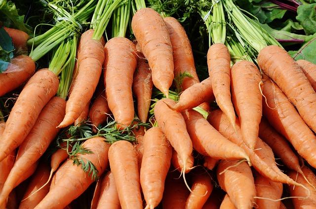 Free carrots vegetables harvest plant fresh nature