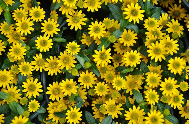 Free flower plant nature yellow flora