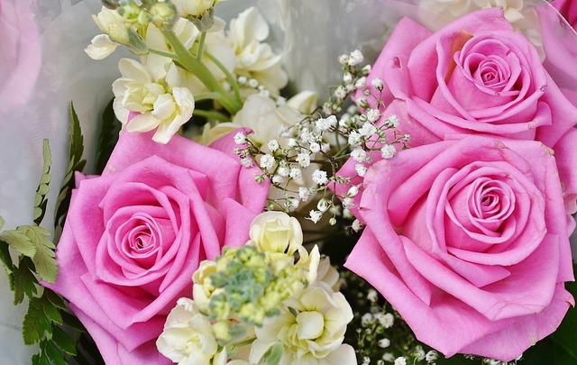 Free flower plant nature roses pink flora tender