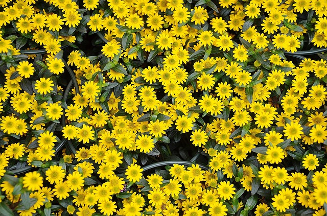 Free flowers plant nature yellow