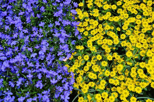 Free                flowers plant nature blue yellow flora colours