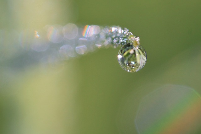 Free dewdrop drop of water dew raindrop beaded drip
