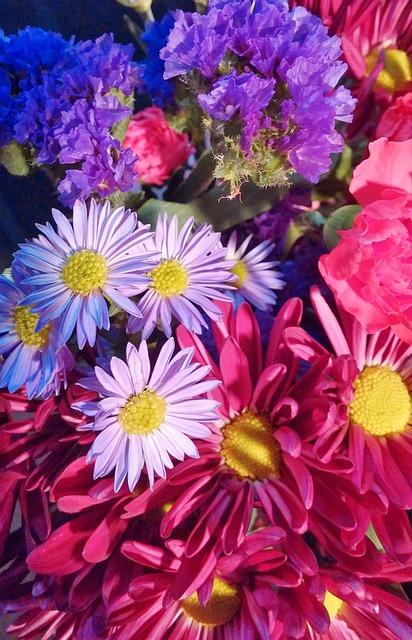 Free flowers floral spring flowers beautiful bloom