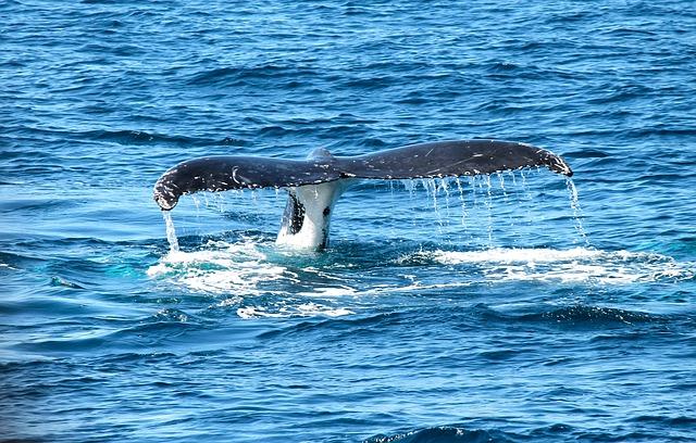 Free whale ocean marine maritime sea sea mammal splash