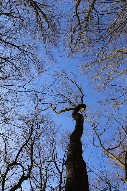 Free canopy forest trees crown treetop branches log