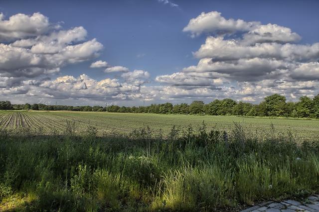 Free landscape clouds field sky blue plant