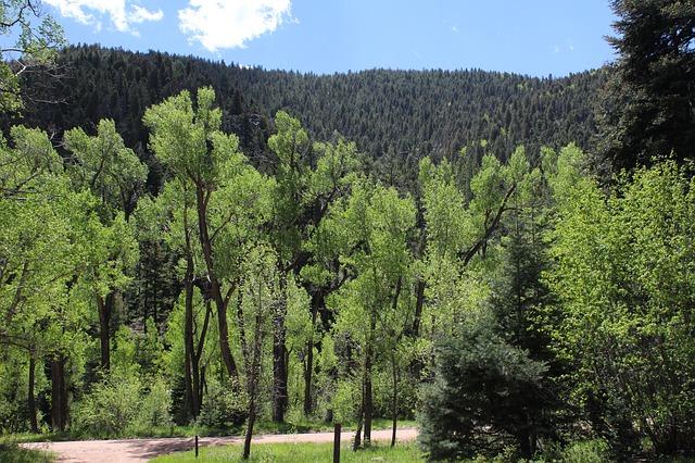 Free summertime green nature scenic aspen trees