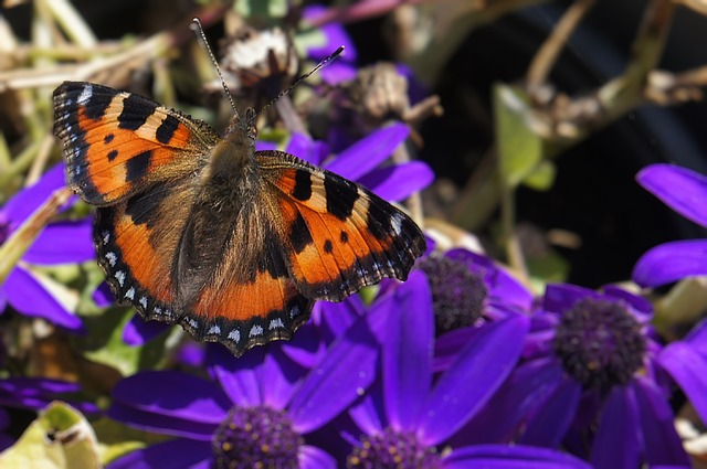 Free Photos: Nature butterfly bug netherlands | GREGOR