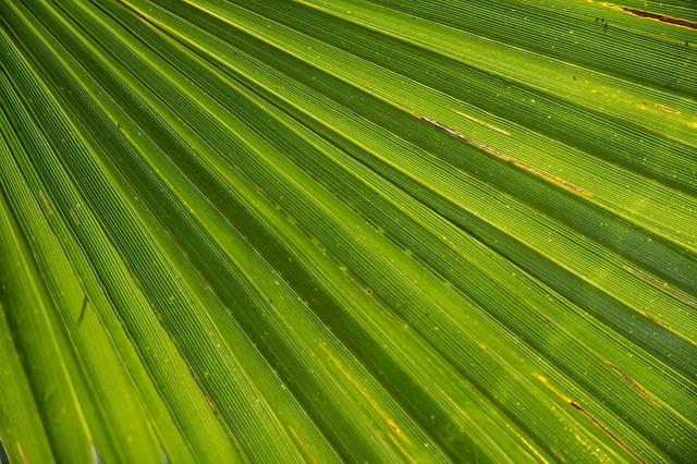 Free palm journal james palm tree close beach