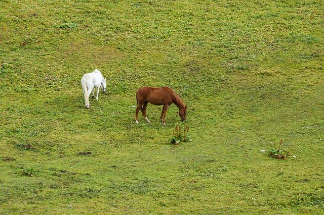Free horses horse alm meadow graze pasture