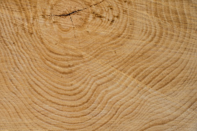 Free wood structure tree texture annual rings grain