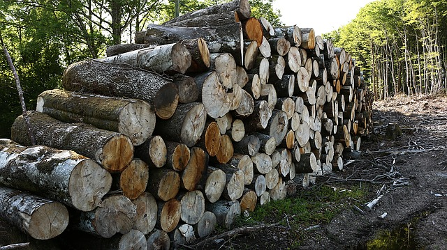 Free heap wood france cup sawn trees wood pile forest