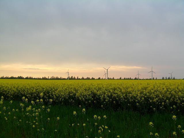 Free oilseed rape rapsfeld rügen windmills