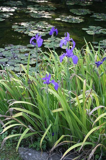 Free flowers pond botanical garden verbania