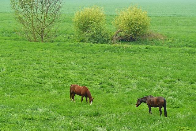 Free horses horse pets animal riding horses pasture