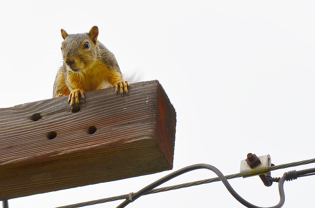 Free squirrel gold curious looking