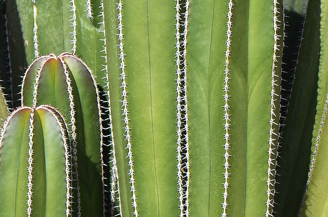 Free cactus mexican background thorns green cacti