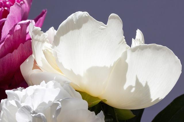 Free pentecost bouquet peony flower nature flora