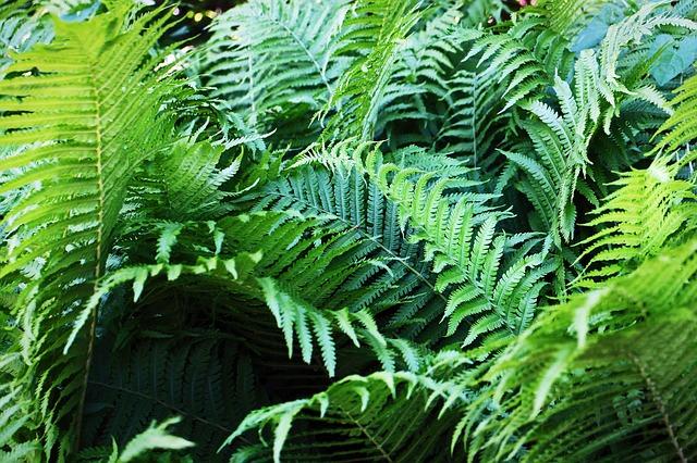 Free fern fiddlehead fern plant fern leaf green plant