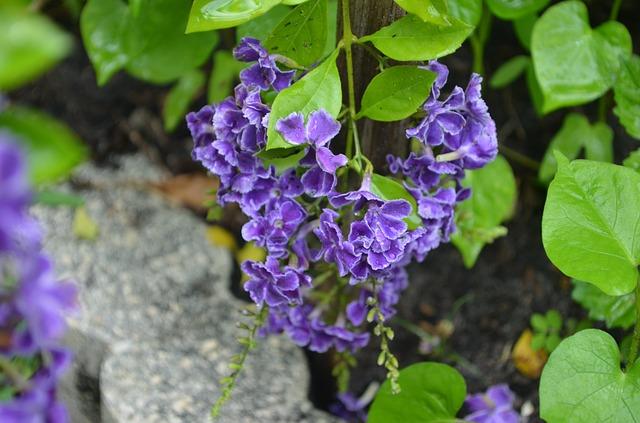 Free flowers purple plant garden