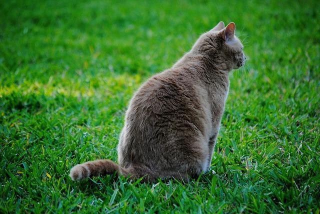 Free cat feline pet grass animal domestic