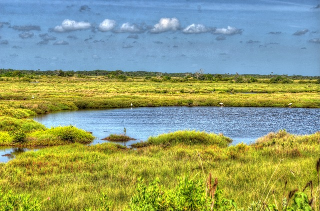 Free cape canaveral swamp lake water marshland grass