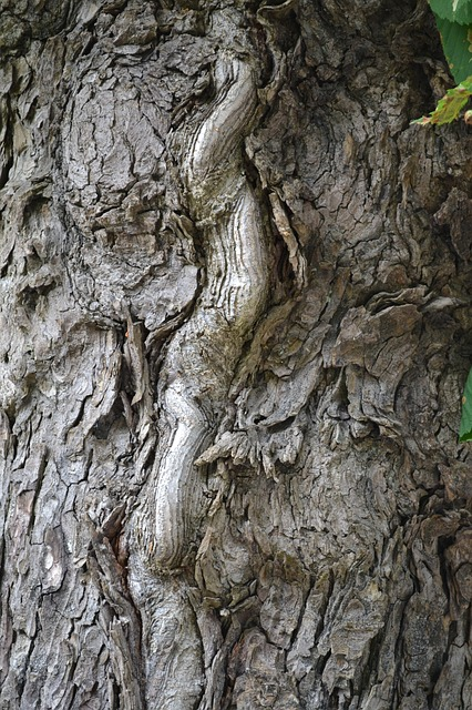 Free tree bark tree bark trunk wood
