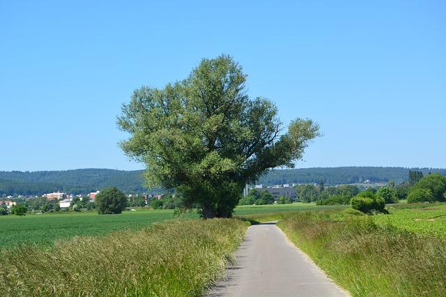 Free field blue green tree grass landscape sky rest