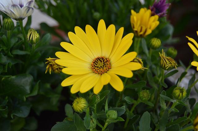 Free flower yellow field plant summer meadow